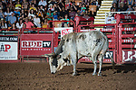 Longhorn during first round of the Fort Worth Stockyards Pro Rodeo event in Fort Worth, TX - 8.10.2019 Photo by Christopher Thompson