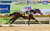 Sting Boy winning at Delaware Park on 10/10/12