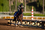 OCT 28: Breeders' Cup Juvenile Fillies entrant Two Sixty, trained by Mark E. Casse, at Santa Anita Park in Arcadia, California on Oct 28, 2019. Evers/Eclipse Sportswire/Breeders' Cup