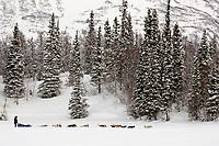 Jerry Sousas sled dog team near Finger Lake Chkpt 2006 Iditarod Finger Lake Alaska Winter