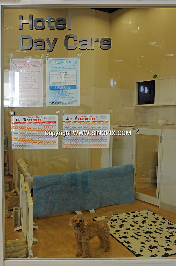 A Day Care Centre  for dogs at an up market vet in Tokyo. <br /> 20-Jan-2011