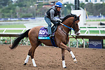 DEL MAR, CA - NOVEMBER 02: Snapper Sinclair, owned by Bloom Racing Stable LLC and trained by Steven M. Asmussen, exercises in preparation for Breeders' Cup Juvenile Turf  during morning workouts at Del Mar Thoroughbred Club on November 2, 2017 in Del Mar, California. (Photo by Michael McInally/Eclipse Sportswire/Breeders Cup)