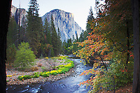 El Capitan, Merced River, Autumn colors, Yosemite National Park