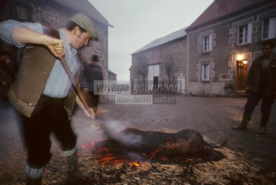 """Europe/France/Limousin/23/Creuse/Cressat: Tuade du cochon à la ferme """"La Saint Cochon"""" - Brûlage de la peau du cochon au feu"""
