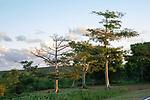 Cool Trees Near Esperanza