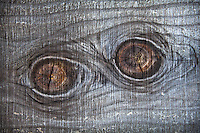 Knots in a redwood fence with swirling grain and weathered, rough-cut texture appear to be a pair of peering eyes.