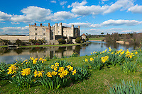 Great Britain, England, Kent, near Maidstone: Leeds Castle, begun in 9th Century and transformed from a fortress into a Palace by King Henry 8th, with Spring Daffodils | Grossbritannien, England, Kent, bei Maidstone: Leeds Castle, begonnen im 9, Jahrhundert und umgebaut von einer Festung zu einen Schloss von Koenig Henrich VIII.