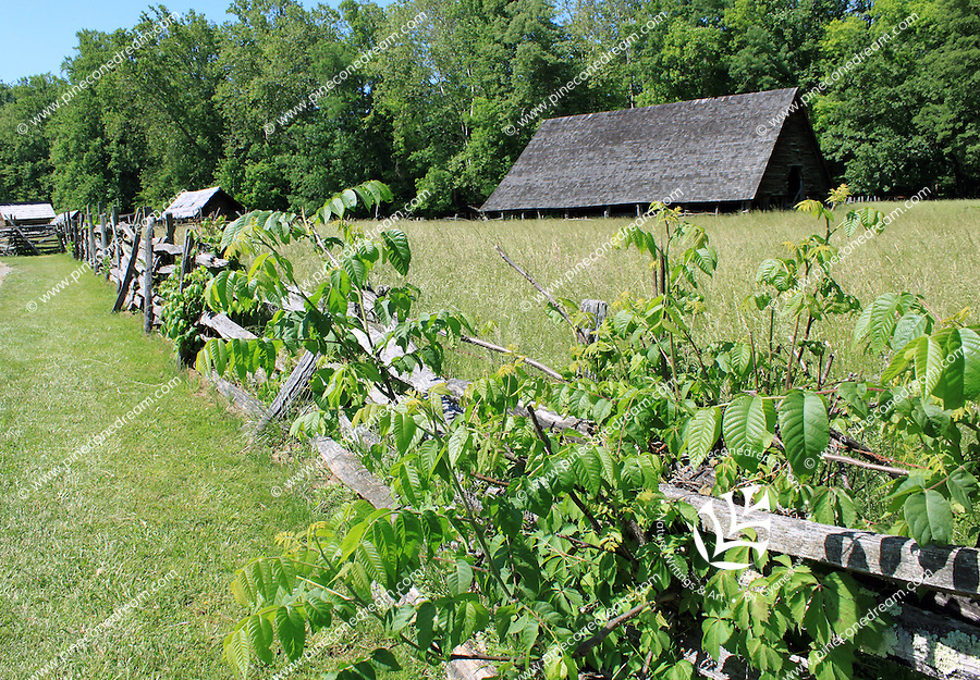 Stock photo: Rustic wooden fence intermingled by wild plants extending in a meadow towards wooden log cabins in the great smoky mountain national park in Tennessee USA.