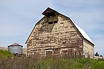 Yellow wooden weathered barn with teasels  in Washington's Palouse.