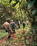 PANAMA, Cana, hiking trails through the jungle near the Cana Field Station close to the Colombian Boarder, Darien Jungle, Central America