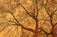 Available as a fine art print and for commercial/editorial licensing directly from Jeff.  Original image photographed on 35mm transparency film.<br /> <br /> Bare Trees on a Winter Night, Union Square Park, New York City, New York State, USA
