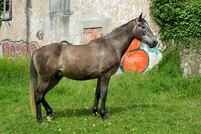 A horse in an abandoned monastery in Asturias