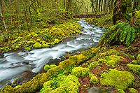 Gordon Creek, Mt. Hood National Forest, in springtime