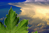 Anvil Storm Cloud with leaf superimposed over it.