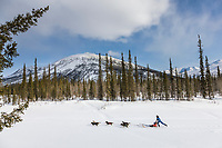 Recreational dog mushing along the Koyukuk River, Brooks Range, Arctic, Alaska.