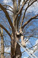 Mädchen, Kind hängt Nistkasten auf, Anbringung eines Vogel-Nistkasten hoch oben in einer Baumkrone, Starenkasten