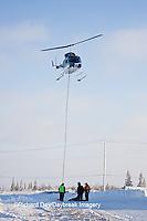01874-11805 Polar Bear (Ursus maritimus) biologists preparing to airlift bear from Polar Bear Compound, Churchill MB