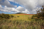 Molokai Landscape