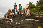 Green Sea Turtle (Chelonia mydas) biologists, Ale Car and Eleonore Hachemen, collecting unhatched eggs, Tortuguero National Park, Costa Rica