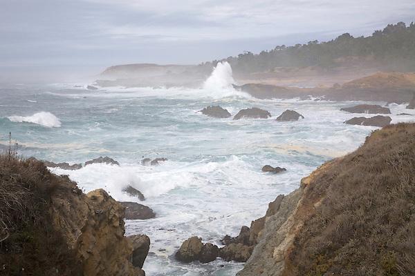 Point Lobos, 2007.