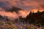 Fog at sunset along the coastal cliffs of the King Range, Lost Coast, near Shelter Cove, Humboldt County, CALIFORNIA