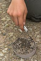 Kinder gießen Tierspur aus Gips, Mädchen reinigt Gipsabdruck vom Trittsiegel, der Fußspur von einem Reh mit einem Taschenmesser von Erdresten