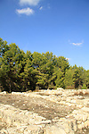 Israel, Upper Galilee, Hurvat Nevoraya in Biria forest