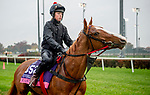 November 1, 2018: East (GB), trained by Kevin A. Ryan, exercises in preparation for the Breeders' Cup Juvenile Fillies Turf at Churchill Downs on November 1, 2018 in Louisville, Kentucky. Michael McInally/Eclipse Sportswire/CSM