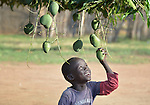 A boy pulls on a mango in Mundri, South Sudan.