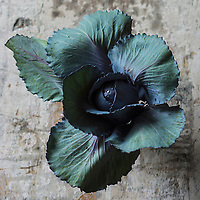Gastronomie générale, Chou-rave // Red cabbage - Stylisme : Valérie LHOMME