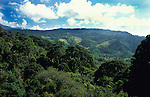Jungle Canopy, Poring Hot Springs, view from walkway, Sabah, Borneo, .Malaysia....