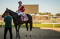 OLDSMAR, FLORIDA - FEBRUARY 11: McCracken #8, ridden by Brian Joseph Hernandez (pink hat), after he wins the Sam F. Davis Stakes, and sets a new track record at Tampa Bay Downs on February 11, 2017 in Oldsmar, Florida (photo by Douglas DeFelice/Eclipse Sportswire/Getty Images)