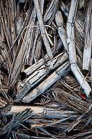 Sugar cane harvest debris on a cane haul road, Haili'imaile Plantation, Maui