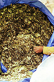 Bolivia. Large bag of coca leaves.