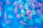 Water Balloons in Wading Pool