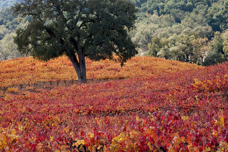 Autumn Colors in Wine Country near Paso Robles, California