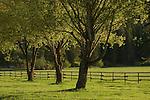 Three trees in a green pasture near Fernan, Idaho
