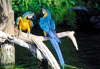 two parrots on a branch
