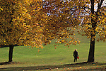 Fall colors with woman walking alone at Woodland Park with ground covered with autumn leaves holding a red umbrella Seattle Washington State USA MR
