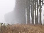 Europa, DEU, Deutschland, Nordrhein Westfalen, NRW, Rheinland, Niederrhein, Kranenburg, De Gelderse Poort, Kranenburger Bruch, Naturschutzgebiet Dueffel, Baeume, Allee, Baumallee, Pappeln, Pappelallee, Dunst, Kategorien und Themen, Natur, Umwelt, Landschaft, Jahreszeiten, Stimmungen, Landschaftsfotografie, Landschaften, Landschaftsphoto, Landschaftsphotographie, Naturschutz, Naturschutzgebiete, Landschaftsschutz, Biotop, Biotope, Landschaftsschutzgebiete, Landschaftsschutzgebiet, Oekologie, Oekologisch, Typisch, Landschaftstypisch, Landschaftspflege....[Fuer die Nutzung gelten die jeweils gueltigen Allgemeinen Liefer-und Geschaeftsbedingungen. Nutzung nur gegen Verwendungsmeldung und Nachweis. Download der AGB unter http://www.image-box.com oder werden auf Anfrage zugesendet. Freigabe ist vorher erforderlich. Jede Nutzung des Fotos ist honorarpflichtig gemaess derzeit gueltiger MFM Liste - Kontakt, Uwe Schmid-Fotografie, Duisburg, Tel. (+49).2065.677997, ..archiv@image-box.com, www.image-box.com]