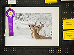 Best of Show, Professional Photography, Michael Maloney, 80th Amador County Fair, Plymouth, Calif.<br /> .<br /> .<br /> .<br /> .<br /> #MichaelMaloney, #AmadorCountyFair, #1SmallCountyFair, #PlymouthCalifornia, #TourAmador, #VisitAmador