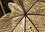 2007 Copyright  Whitney Lauren Robinson Stubbart / Lambi Arts Sepia Photography Puerto Rico, buildings, insects, architecture, botanical,