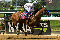 ELMONT, NY - JUNE 10: American Anthem #8, ridden by Mike Smith, wins the Woody Stephens Stakes on Belmont Stakes Day at Belmont Park on June 10, 2017 in Elmont, New York (Photo by Sue Kawczynski/Eclipse Sportswire/Getty Images)