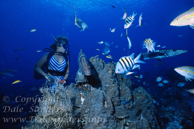 Scuba Diver watches a Great Barracuda patrolling a coral reef rich in fish life, Grand Cayman Island, BWI.