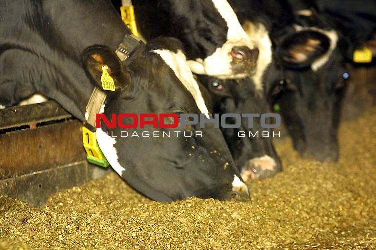 Maekel, DEU, 05.01.2001<br /> <br /> Die Angst der BSE Krankheit bei Rindern geht immer weiter.<br /> Nach der Schlachtung muessen sie nun einem BSE - Schnelltest unterzogen werden. Die Landwirte sorgen sich um ihren wertvollen Rinderbestand. Der Rinderpreis geht in den Keller. Foto ein BSE freier Hof im Landkreis Diepholz<br /> <br /> [Foto ł nordphoto -  Foto ist honorarpflichtig!  7 % MwSt. Belegexemplar erforderlich - (Dig.Fotografie)<br /> Georg-Reinke-Strasse 1; 49377 Vechta<br /> Bankverbindung: Kreissparkasse Diepholz; Konto Nr. 7419 / BLZ 25651325 Telefon: 04441-89400 / Fax: 04441-894022<br />  http://www.nordphoto.de / info @ nordphoto.de]