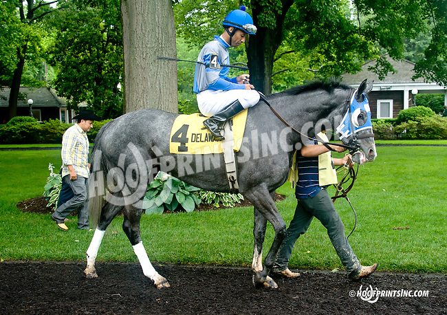Clear Pasaj before The Dashing Beauty Stakes at Delaware Park racetrack on 6/12/14