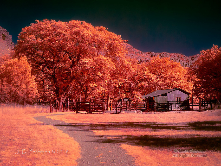 Faraway Ranch, Chiricahua National Monument (Infrared)