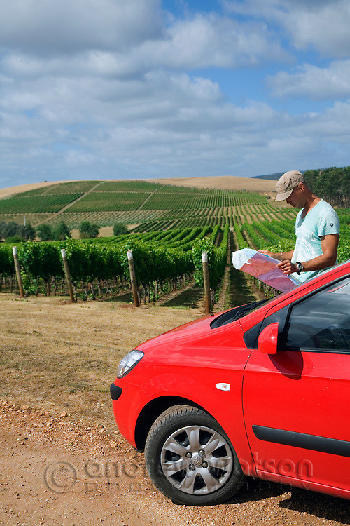 A man checks a road map while driving through vineyards.  Pipers River, Tasmania, AUSTRALIA