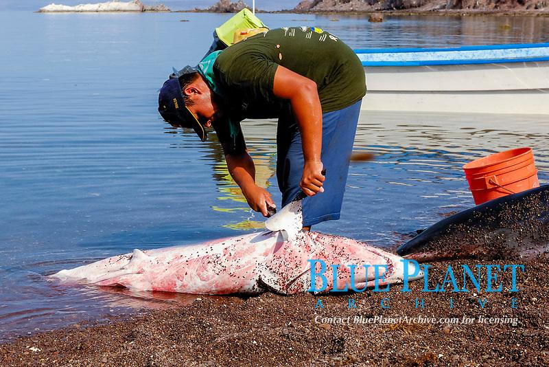 Shark fishing, shark finning, Shark finning, Mako shark, Isurus oxyrinchus, Sea of Cortez, Mexico, Pacific Ocean