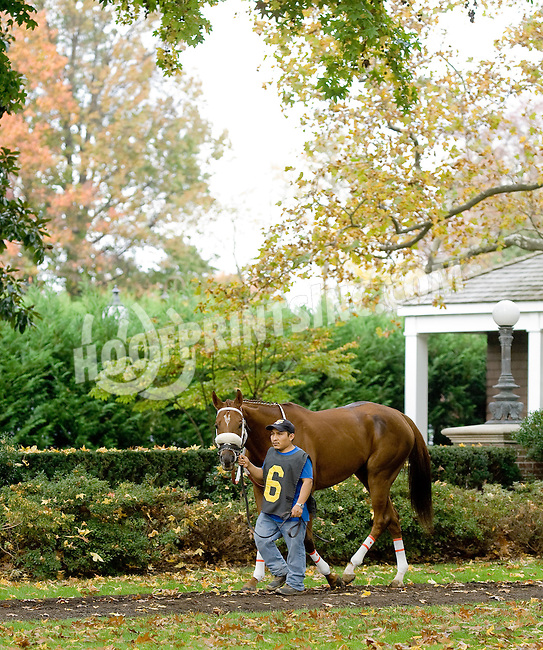 Worthy Wager at Delaware Park on 10/27/12..